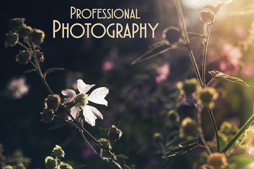 commercial photography, product photography, photographer, kilkenny, ireland